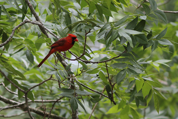 Yet another Cardinal
